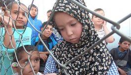 НТВ: Что ждет беженцев из лагеря Аль-Холь